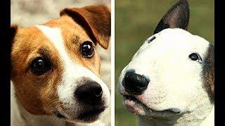 All Terrier Dog Breeds List (A-Z)