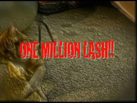 """One Million Lash"""