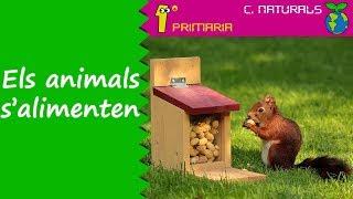 Ciències de la Naturalesa. 1r Primaria. Tema 5: Els animals s'alimenten