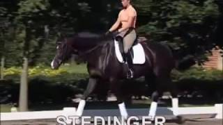 video of Stedinger