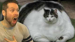 Fattest Pets of ALL-TIME! BIG CHONKERS!