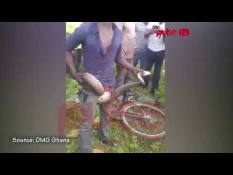 'Juju' or bravery? Man allegedly sucks poison out of a snake