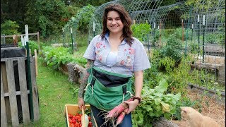 FULL Fall Garden Tour & Harvest   October 2018   Roots And Refuge Farm