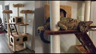 New Cat Tower Review | November 2018 Vlog