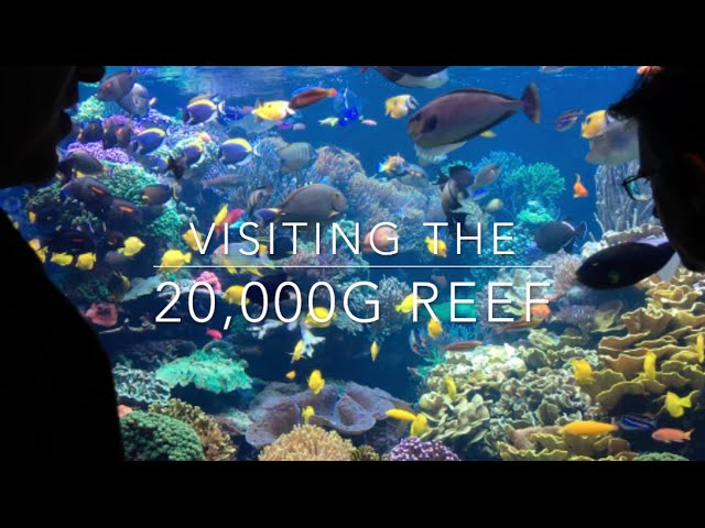 20,000g Reef - Learn how it is maintained all these years