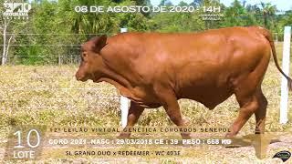 Coro 2021 b4 fiv