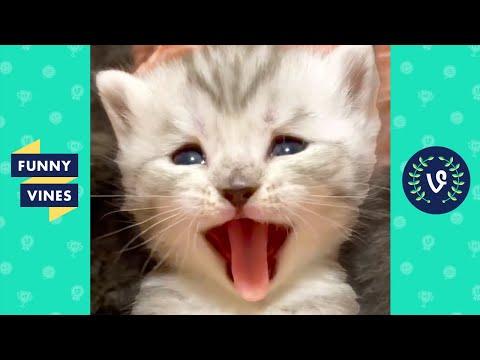 """""""ADORABLE KITTEN 😍🐱""""   FUNNY CATS AND CUTEST KITTENS!"""