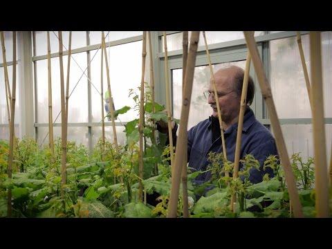 Film: Vill du veta mer om civilingenjörsprogrammet i bioresursteknik?