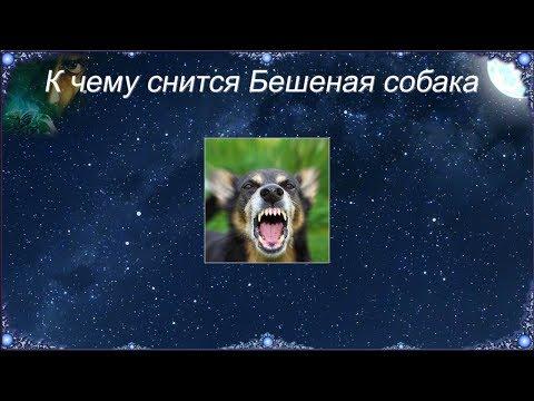 К чему снится Бешеная собака (Сонник)