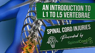 Spinal Cord Injuries L1, L2, L3, L4, & L5 Vertebrae Explained. Symptoms, Recovery, Causes, Prognosis