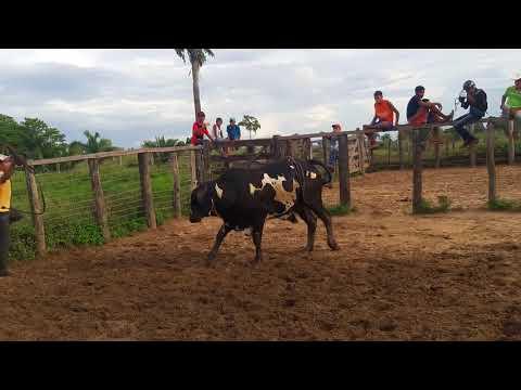 Treino na ouro preto em Axixá do Tocantins