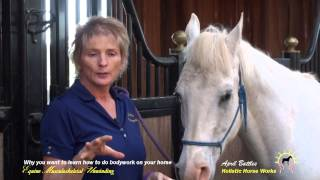 Why you want to learn how to do bodywork on your horse