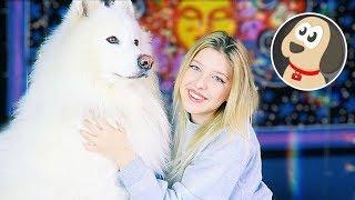 Köpeğimi Nasıl Yıkıyorum ? I Bilge Su Işık & Çarşı