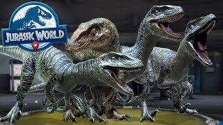 RAPTOR SQUAD ASSEMBLE!!! - Jurassic World Alive   Ep19 ( Jurassic GO )