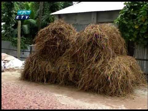 কুড়িগ্রাম ও গাইবান্ধায় গো-খাদ্য সংকট  | ETV News