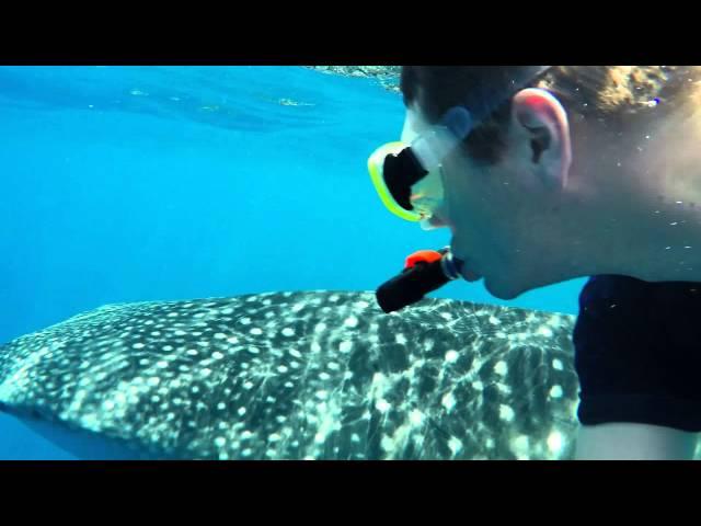 Whale Shark Snorkeling Tour - Maldives