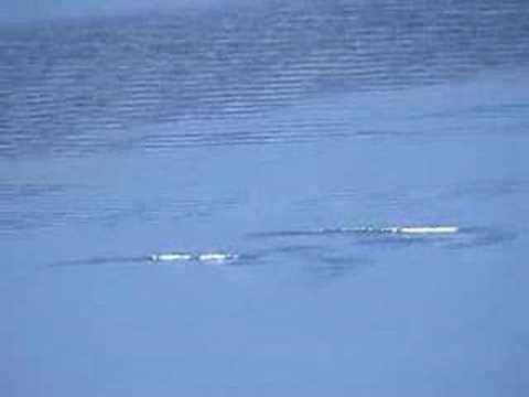 Lake Monster Sightings: Ogopogo Videos