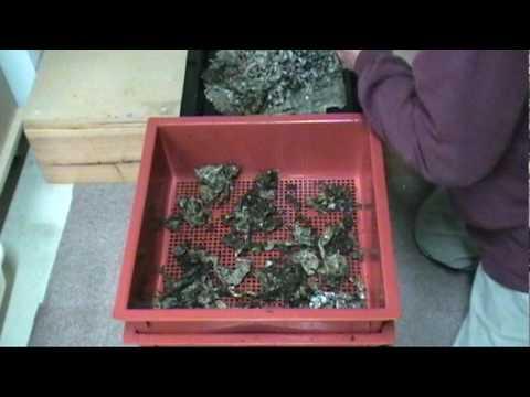 Mensahe sa insekto parasitiko