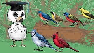 BirdWiser Explainer Video