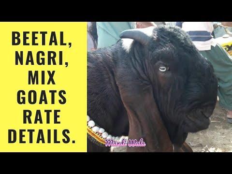 201 | Cow mandi 2019 Multan | Mandi me Bachro k Rate Kya