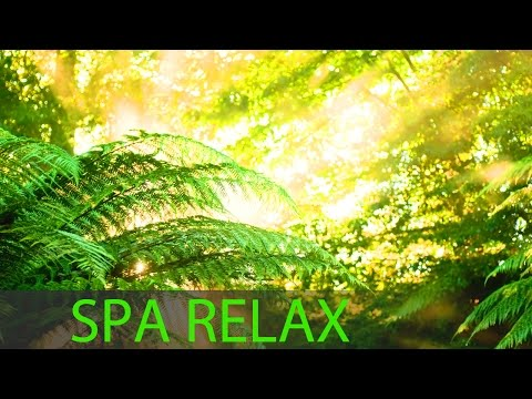 Meditation Music Relax Mind Body, Relaxation Music | Youtube Search