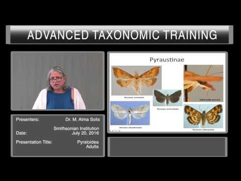Introduction to Lepidoptera - overview of Pyraloidea adults