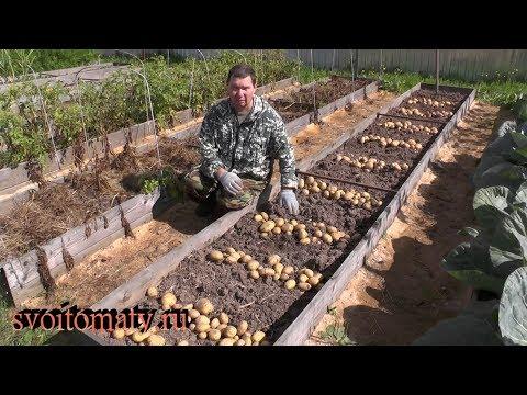Один из способов выращивания картофеля в грядках. Результаты
