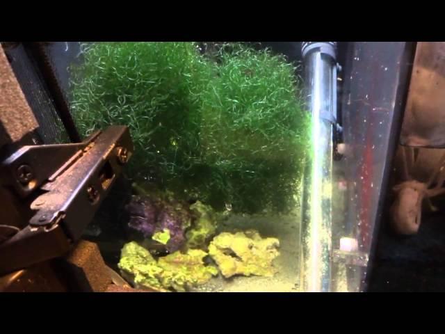 Aquarium Sump Refugium- 75 Gallon Reef Tank