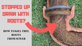 How to get rid of Tree Roots from the sewer drain line