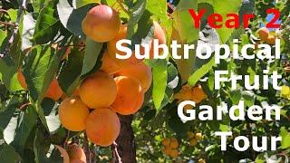 Tour Of Subtropical Fruit Garden (Year 2): 70+ Fruit Plants