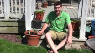 How to Grow Broccoli In Containers - Complete Growing Guide