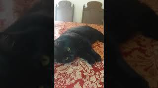 Mark 9 25 2017 cat