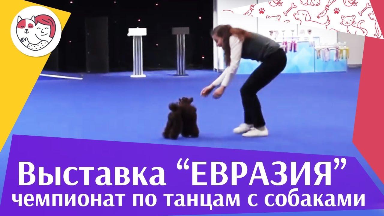 Чемпионат РКФ по танцам с собаками 4 на Евразии 17 ilikepet