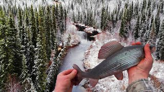Ловля хариуса на реках севера 2020