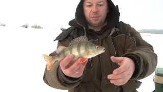 Ловля крупного окуня в пруду зимой