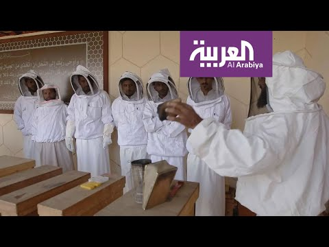 العرب اليوم - شاهد: مشاهد من مبادرة أرامكو لإنتاج العسل بالسعودية