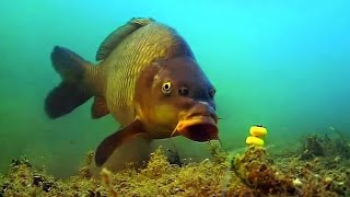 Подводная съёмка,ловля карпа!
