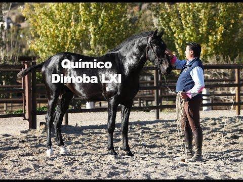 Químico Dimoba LXI  - Trabajo a la cuerda (Publicado dic-18)