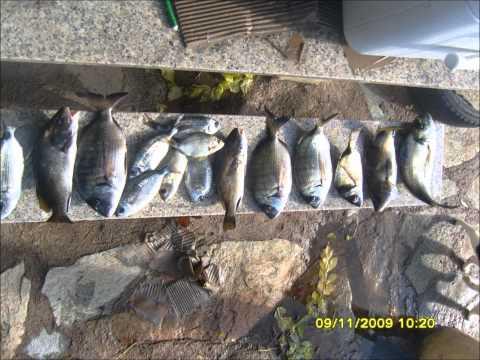 Scaricare una caccia di gioco e una pesca 2