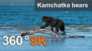 360°, Journey to the bears in the Kronotsky Reserve, 8K video
