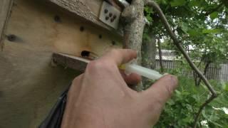 пробую поймать Рой Пчел на Кассетный Павильон для Пчел