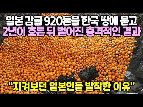 한국에서 일본감귤 920톤을 땅에 묻자 일어난 놀라운 일