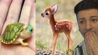 GLI ANIMALI PIÙ PICCOLI E CARINI DI SEMPRE