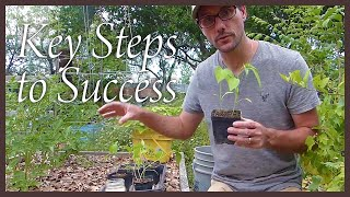 How to Plant Peppers: Key Steps to Success