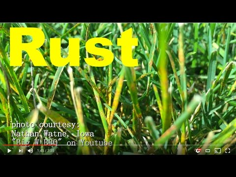 Video How To Get Rid Of Rust Disease/Fungus In The Lawn