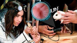 Animales bajo el microscopio   Son lo mejor del mundo