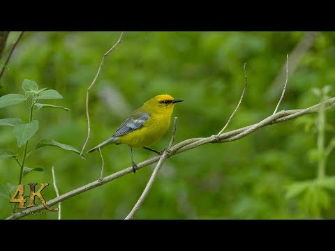 The 4K Guy: The great spring bird migration of Eastern Canada