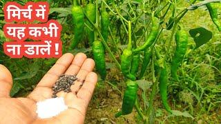 Chilli Plants Care || Best Fertilizer for chilli plant