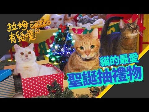 貓咪的聖誕禮物,收到不同大小的空紙箱