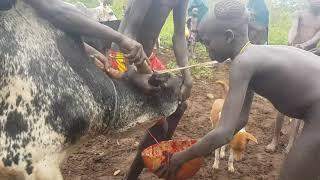 Surma Tribe (Suri) የሱርማ ብሄረሰብ አኗኗር በኢትዮጵያ